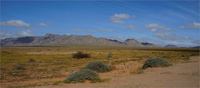thumb_richtersveld_yellow_field.1024