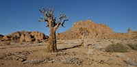thumb_In_the_shadow_of_the_dead_quiver_tree.1024